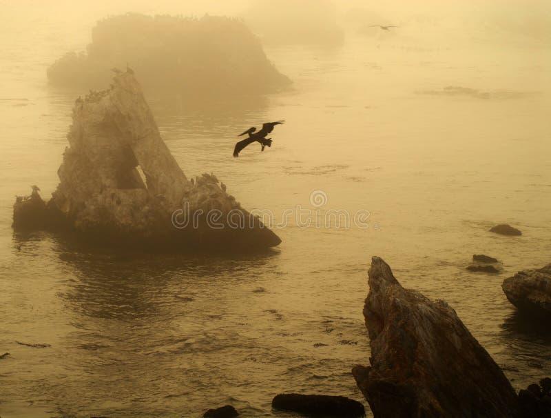 Grupo de islas de la playa California de Pismo con el pelícano en flig imagen de archivo