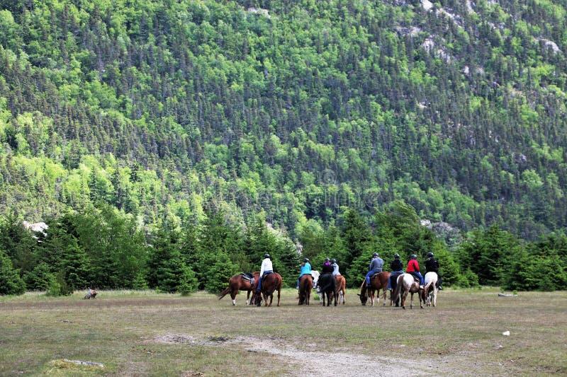 Grupo de jinetes de lomo de caballo en Dyea, Alaska foto de archivo