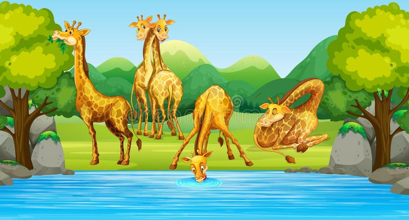 Grupo de jirafa en naturaleza ilustración del vector