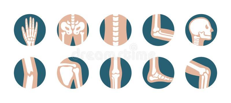 Grupo de junções e de ossos humanos Vector ícones do joelho, do pé, da pelve, da omoplata, do crânio, do cotovelo, do pé e da mão ilustração do vetor