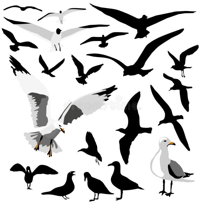 Grupo de la gaviota stock de ilustración
