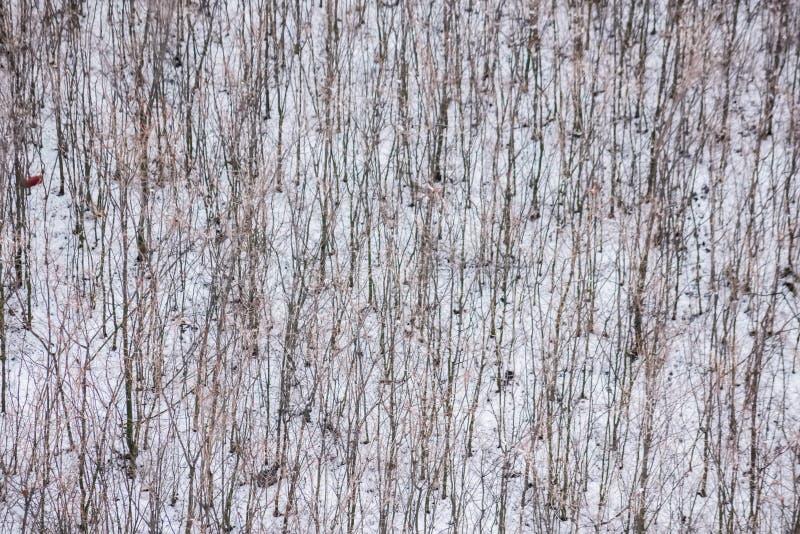 Grupo de la visión superior de árboles desnudos en nieve del invierno imágenes de archivo libres de regalías