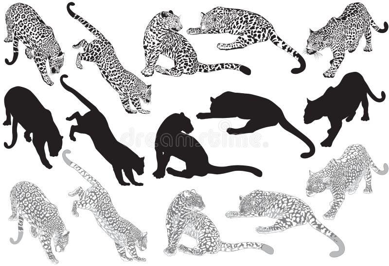 Grupo de leopardo em um fundo branco ilustração stock