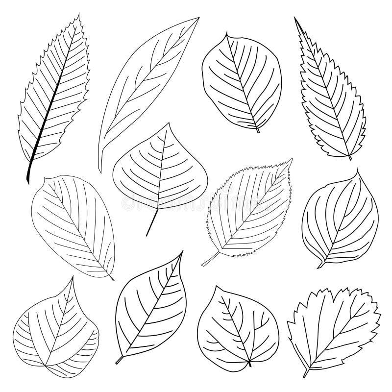 Grupo de linha ícone da folha ilustração do vetor