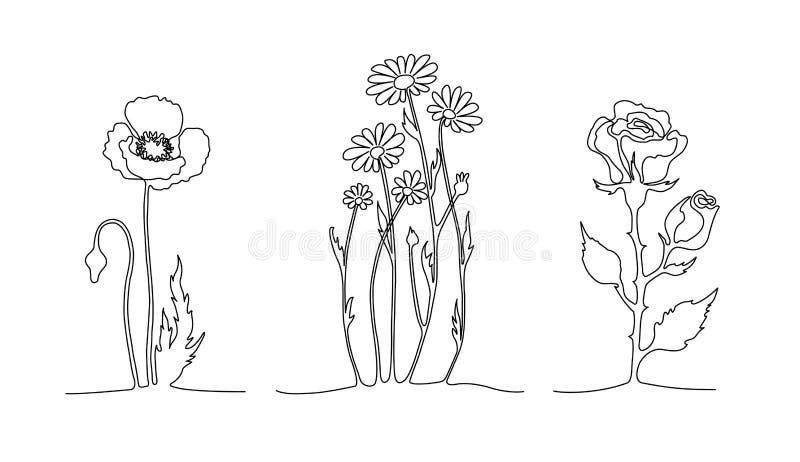 Grupo de linha contínua flores A papoila, camomila, aumentou Um a lápis conceito do desenho ilustração stock