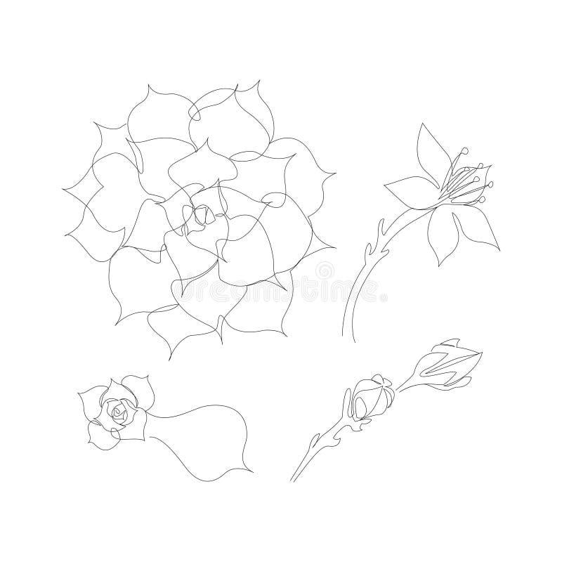 Grupo de linha contínua plantas carnudas Echeveria de florescência, flor suculento bonita ilustração stock