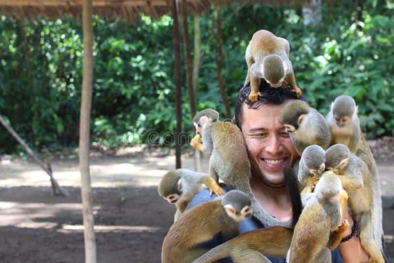 Grupo de macacos que jogam com um homem imagens de stock