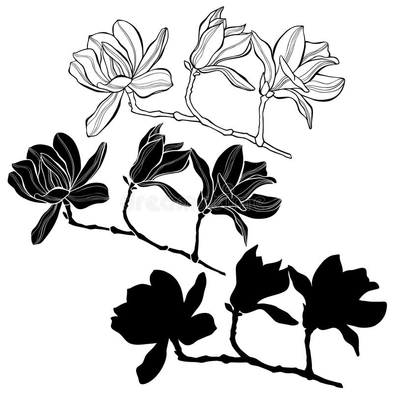 Grupo de magnólia isolado no fundo branco Mão desenhada ilustração do vetor
