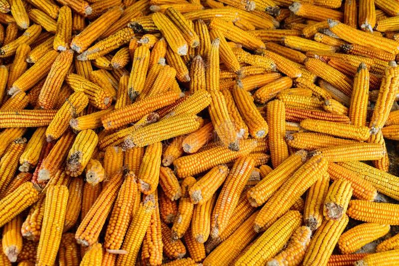 Grupo de milho secado imagem de stock