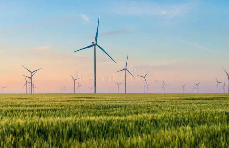 Grupo de molinoes de viento para la producción de la energía eléctrica en el campo del trigo verde fotos de archivo