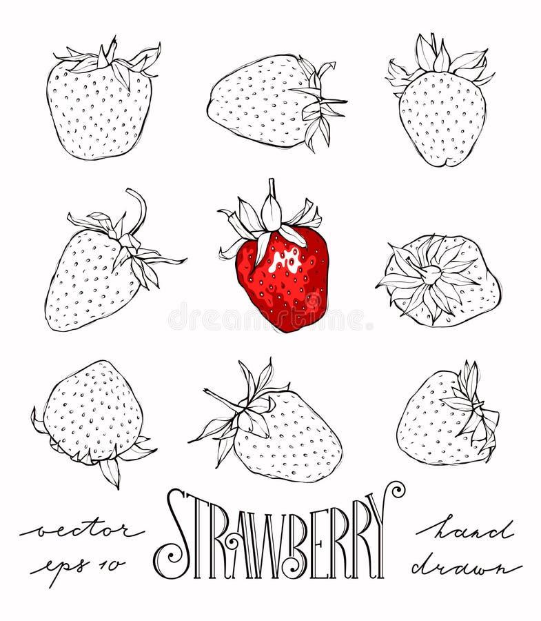Grupo de morangos do vetor ilustração royalty free