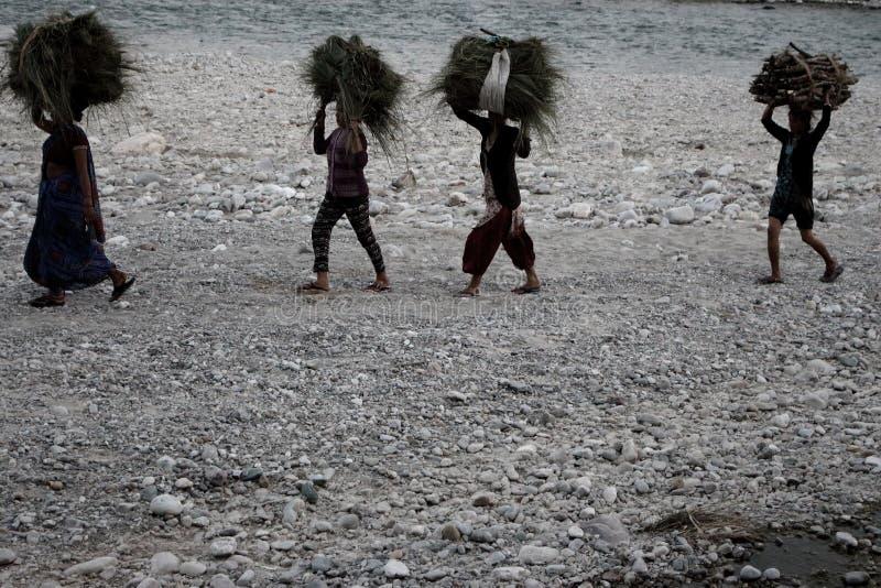 Grupo de mulheres indianas que levam tradicionalmente polias da grama em suas cabeças no banco de rio em Jim Corbett National Par fotografia de stock