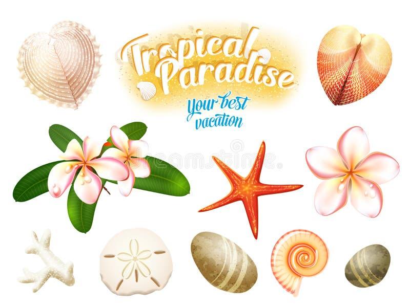 Grupo de objetos tropicais da natureza: os shell do mar, plumeria florescem o dólar de areia do frangipani, a estrela do mar e se ilustração royalty free