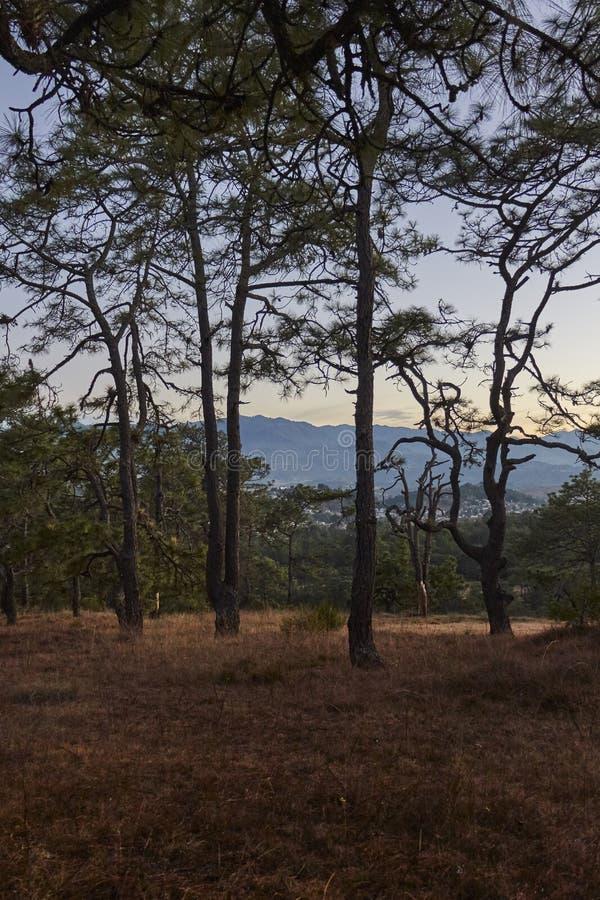 Grupo de ocotes na floresta fotografia de stock royalty free