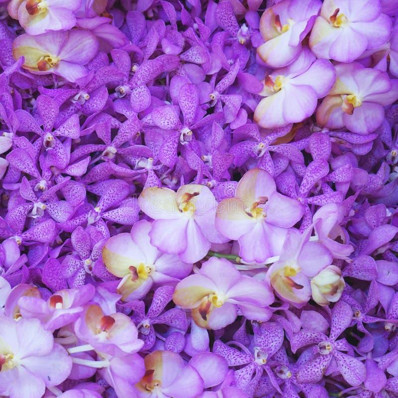 Grupo de orquídea púrpura fotografía de archivo libre de regalías