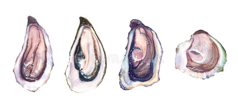 Grupo de ostra diferente de quatro ostras ilustração do vetor