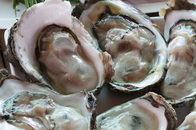 Grupo de ostras grandes pacíficas frescas cruas decoradas/animal ascendente próximo da geleia no restaurante do marisco, ostras c foto de stock royalty free
