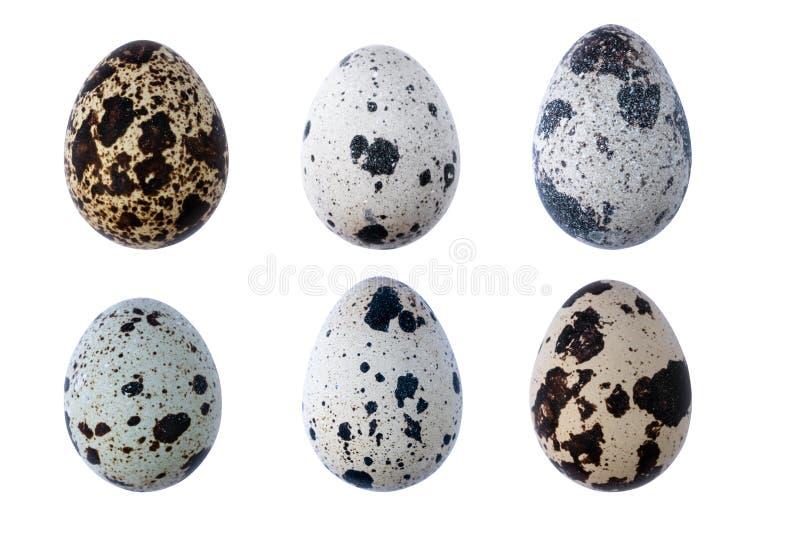 Grupo de ovos de codorniz isolados no fundo branco imagem de stock royalty free
