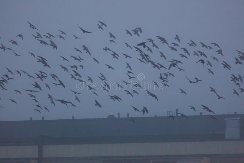 Grupo de pájaros que vuelan sobre el tejado del edificio fotografía de archivo libre de regalías