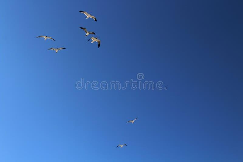 Grupo de pájaros de vuelo fotos de archivo libres de regalías