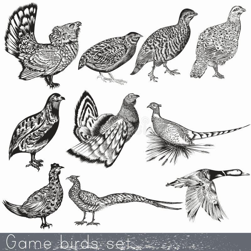 Grupo de pássaros de jogo tirado detalhados da mão ilustração stock