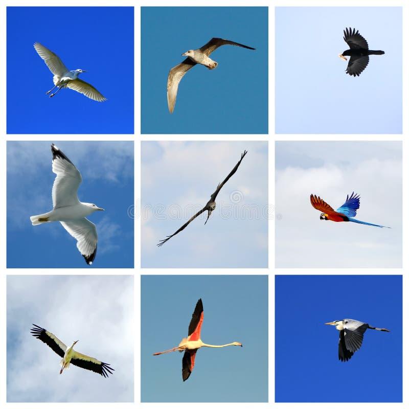 Grupo de pássaros de voo fotografia de stock