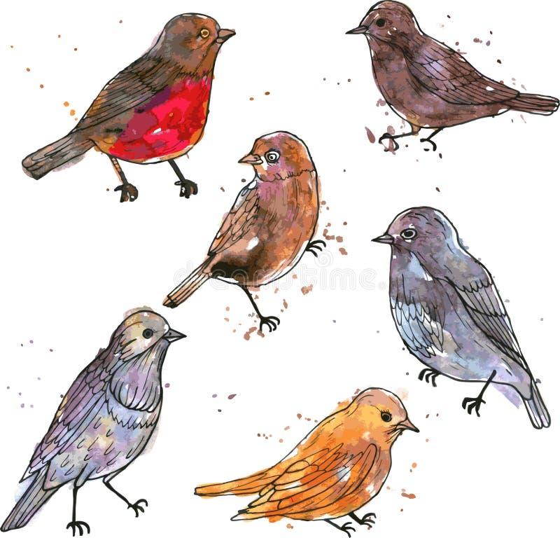 Grupo de pássaros do desenho da aquarela ilustração do vetor
