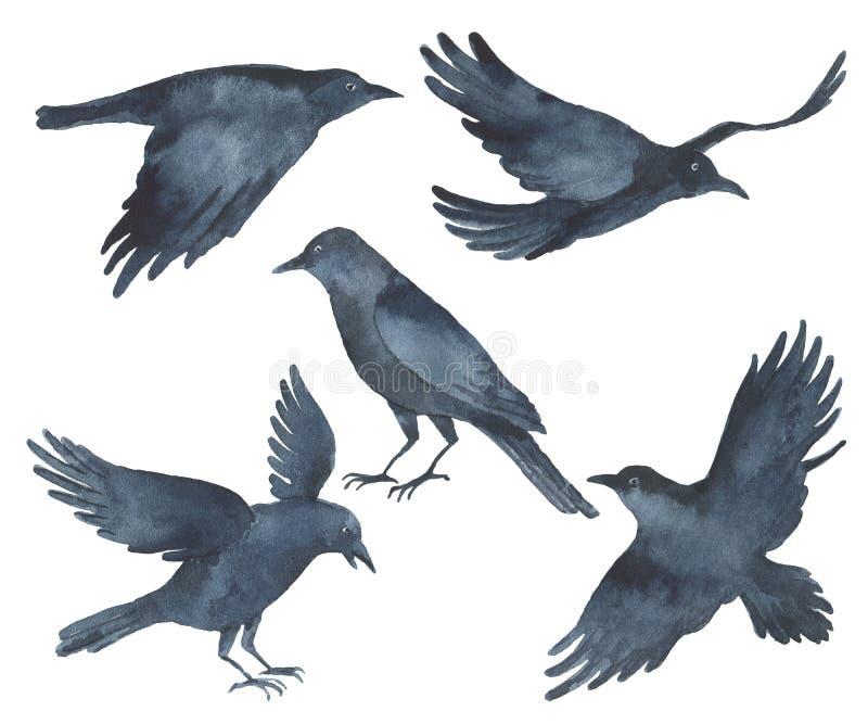 Grupo de pássaros do preto do corvo da aquarela ilustração do vetor