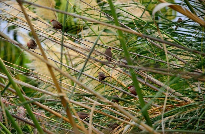 Grupo de pássaros pequenos foto de stock