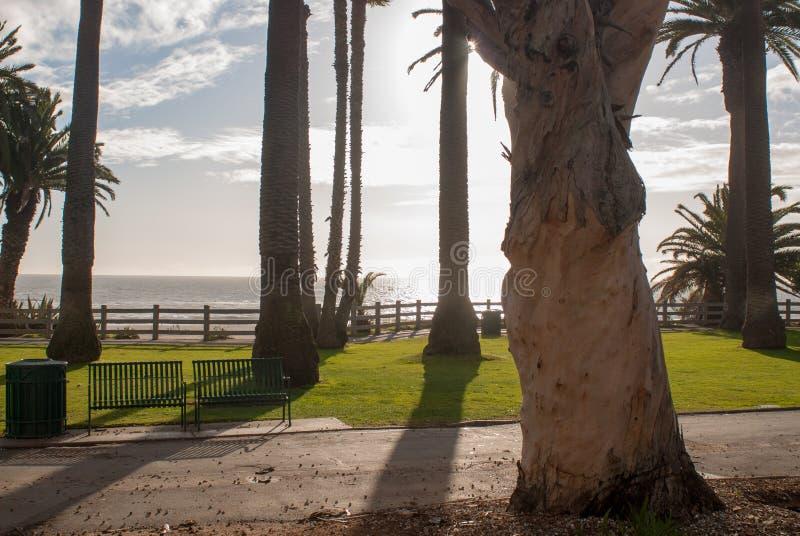 Grupo de palmeiras foto de stock