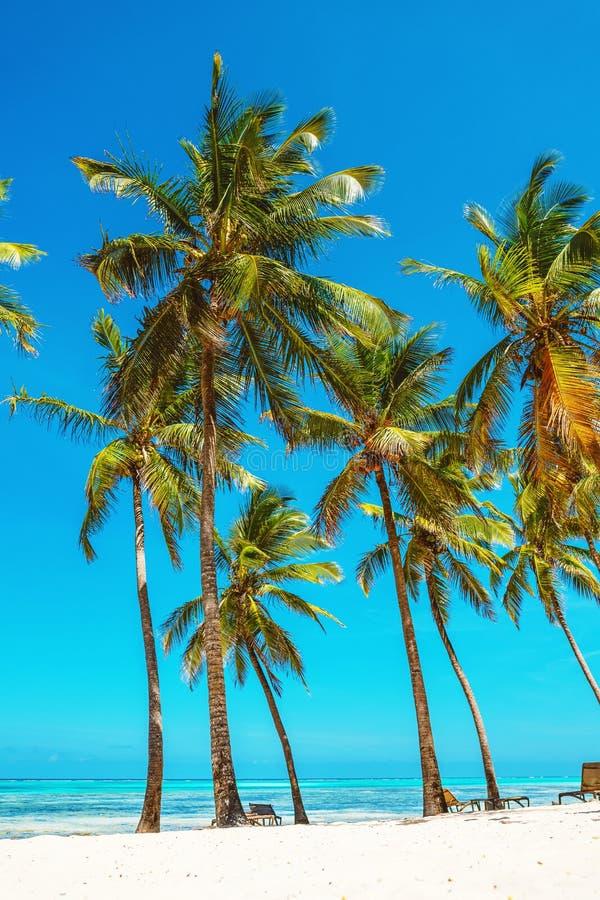 Grupo de palmeiras do coco na praia branca em Zanzibar fotos de stock royalty free