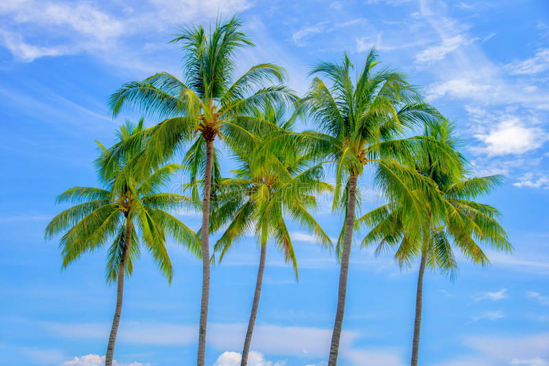 Grupo de palmeras, cielo azul fotografía de archivo