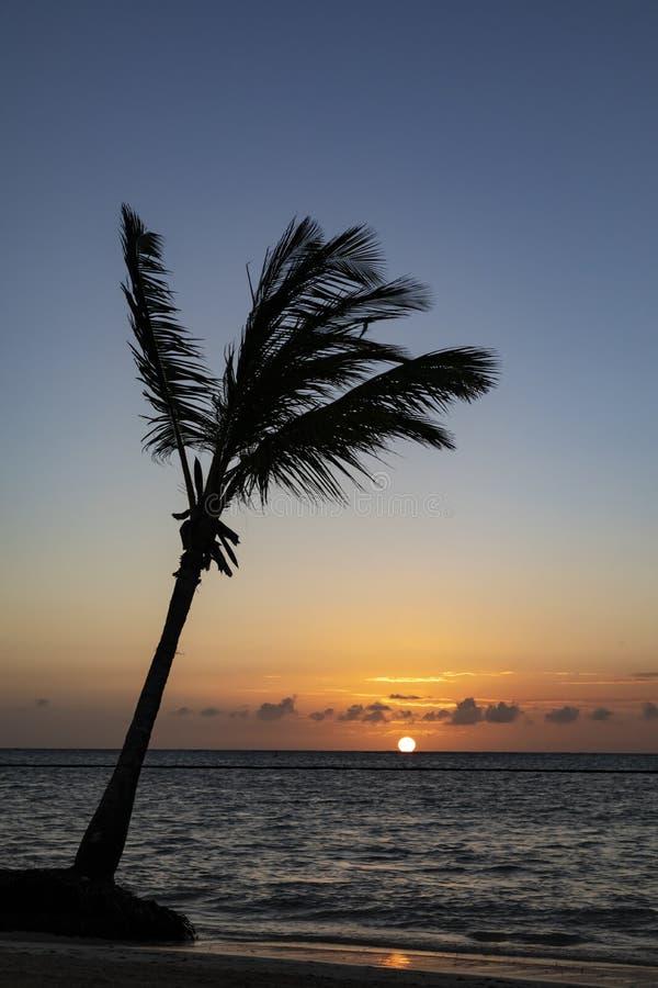 Grupo de palmeras con los sillones de la hamaca y de la calesa en la playa en el Caribe imagenes de archivo