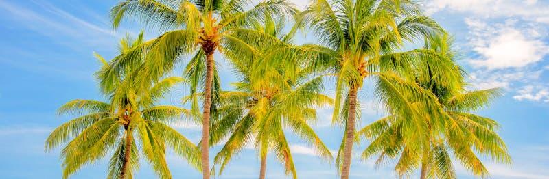 Grupo de palmeras, concepto panorámico del viaje del verano imagen de archivo libre de regalías