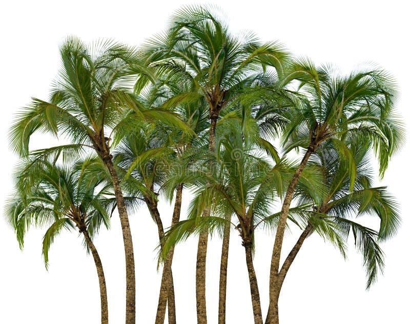Grupo de palmeras en el fondo blanco foto de archivo