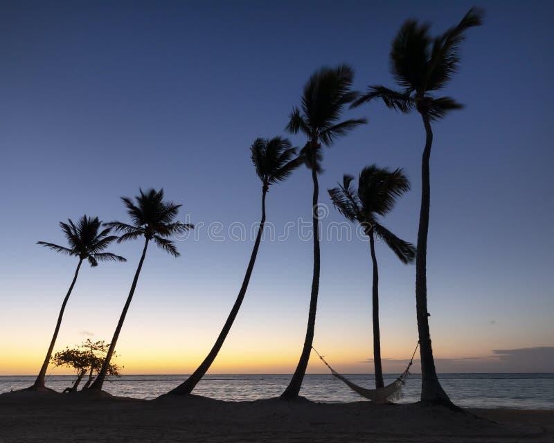 Grupo de palmeras y de hamaca en la playa en el Caribe en la salida del sol imágenes de archivo libres de regalías