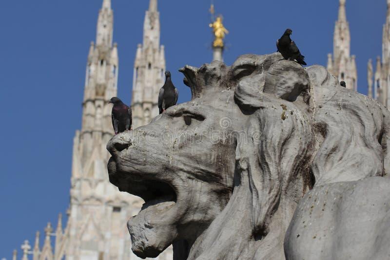 Grupo de palomas en la estatua maravillosa del león en Piazza Duomo de Milano Italia, sucio de mierda pooping del pájaro imagen de archivo
