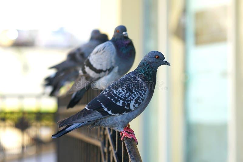 Grupo de palomas en una cerca en Creta fotos de archivo