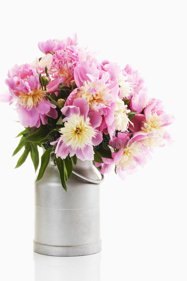 Grupo de peônias cor-de-rosa imagem de stock