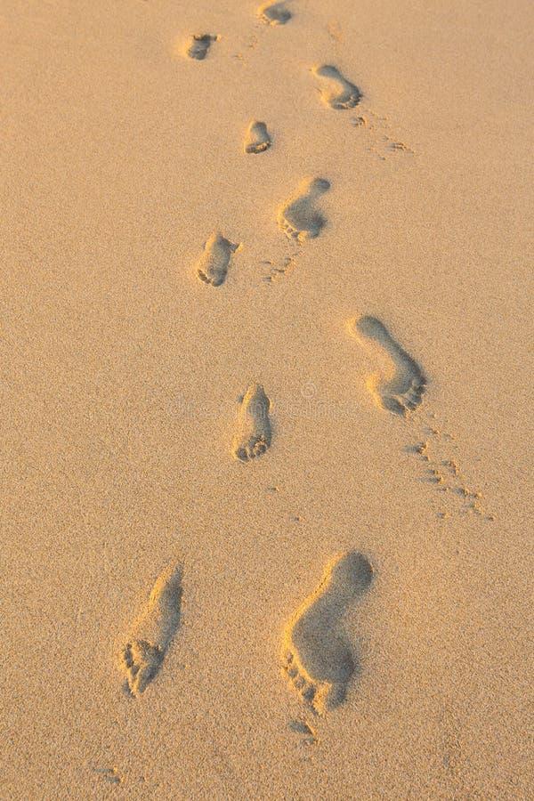 Grupo de pegadas na areia na praia de Havaí imagem de stock
