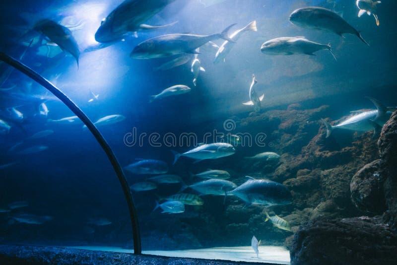 Grupo de peixes exóticos em um grande aquário em um parque da água foto de stock royalty free