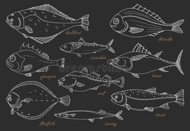 Grupo de peixes de mar Marisco Esboço do vetor ilustração royalty free