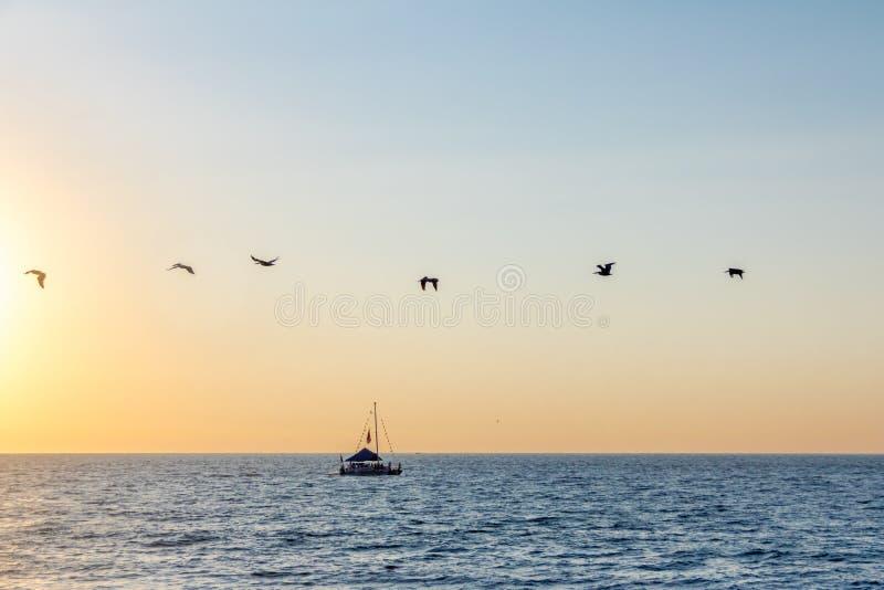 Grupo de pelícanos que vuelan en la playa en la puesta del sol - Puerto Vallarta, Jalisco, México imagen de archivo