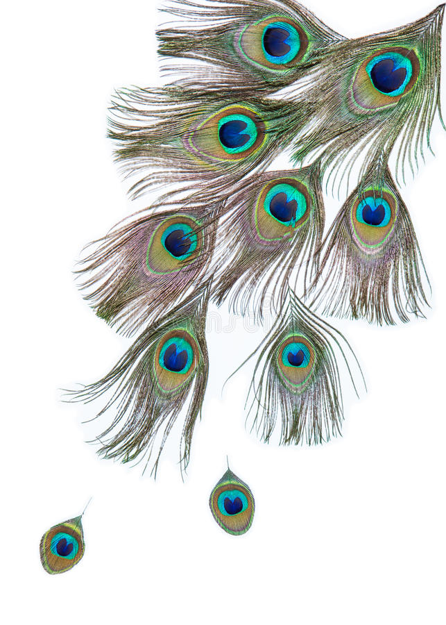 Grupo de penas brilhantes do pavão imagens de stock royalty free