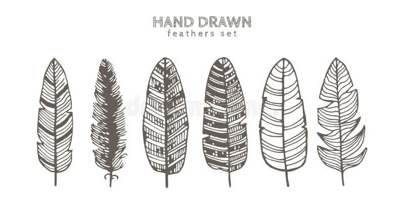 Grupo de penas decorativas dos animais Ilustração da tinta Isolado no fundo branco Arte tirada mão do vetor ilustração stock
