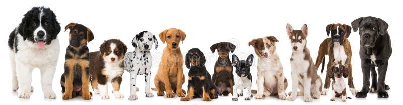 Grupo de perritos de la raza imagen de archivo libre de regalías