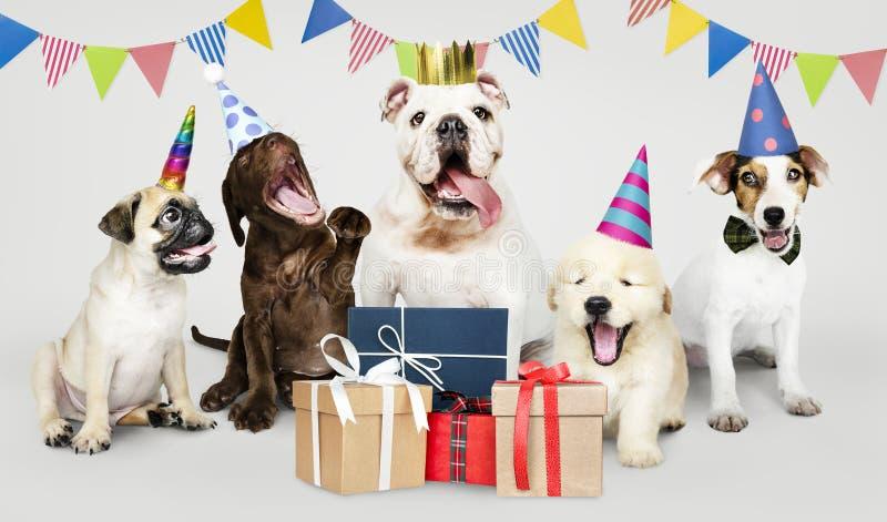 Grupo de perritos que celebran un Año Nuevo imágenes de archivo libres de regalías