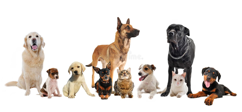 Grupo de perritos y de gatos foto de archivo libre de regalías