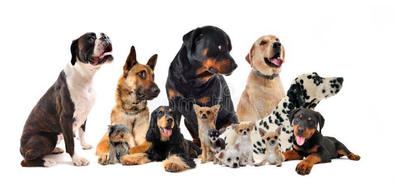 Grupo de perros fotografía de archivo