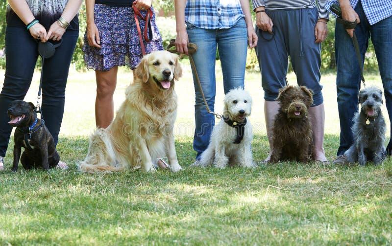 Grupo de perros con los dueños en la clase de la obediencia imágenes de archivo libres de regalías